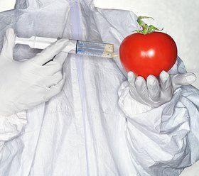 ГМО — плюсы, минусы, опасности