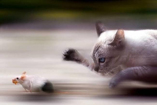 Animal Magic - фото животных