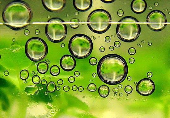 Departamentul de Energie din SUA a anunţat dezvoltarea unei tehnologii inovatoare în producerea biocombustibililor