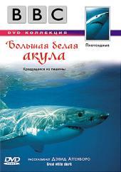 Суперхищники: Большая белая акула