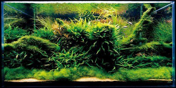 Подводные сады аквариумов от Такаши Амано