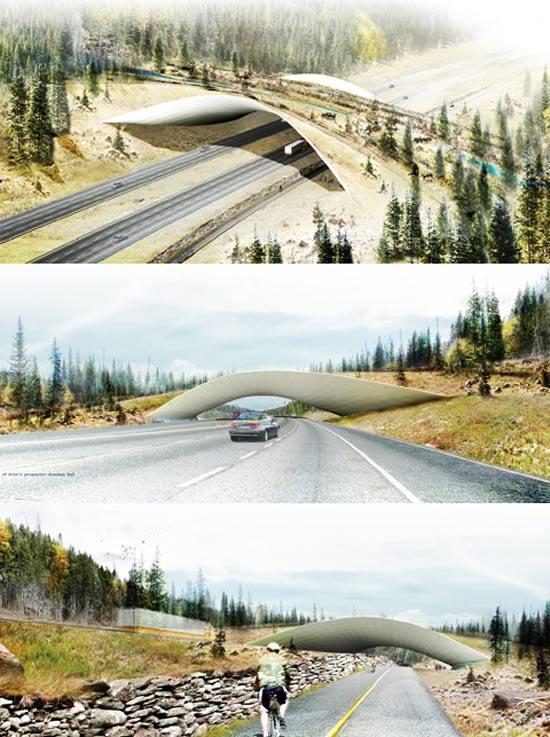 Дизайнеры перевели через дорогу дикую природу