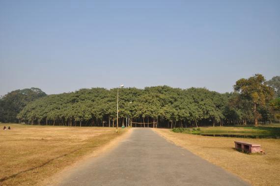 Баньян: дерево - лес