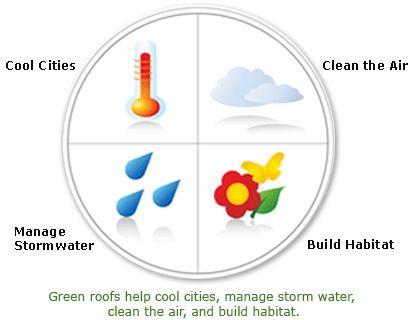 Principalele funcţii ale acoperişurilor verzi în oraş