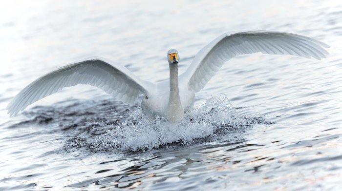 Fotografiile frumoase ale animalelor (Foto)