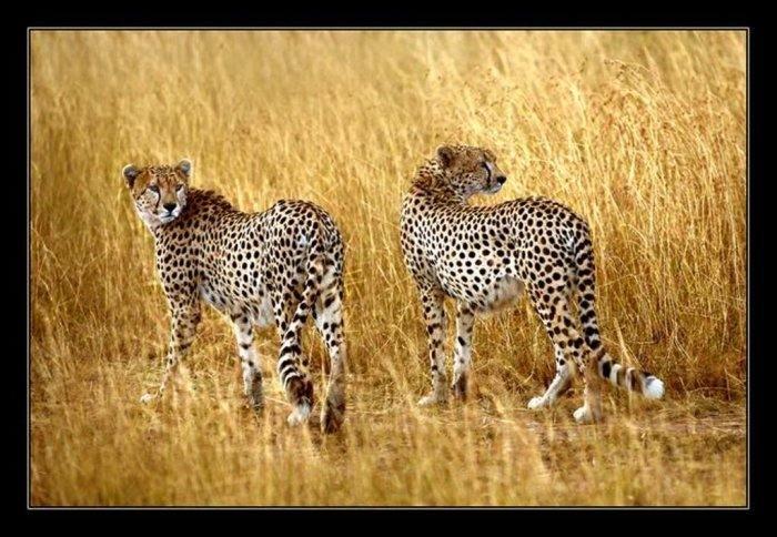 Fotografiile frumoase ale animalelor