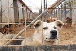 Защитники животных требуют ускоренного принятия закона о содержании бездомных собак