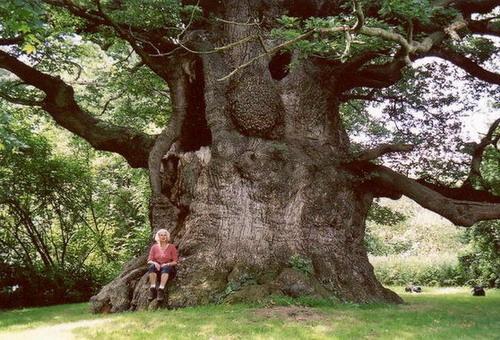 Cel mai mare arbore