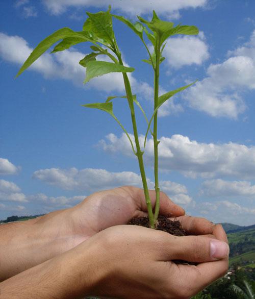 Министерство окружающей среды начинает акцию по борьбе с загрязнением воздуха