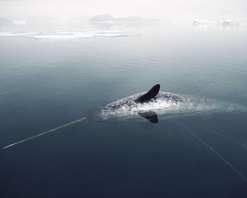 13 животных Арктики