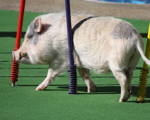 9 самых умных животных Земли