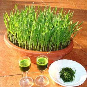 Новый тренд: зеленый сок