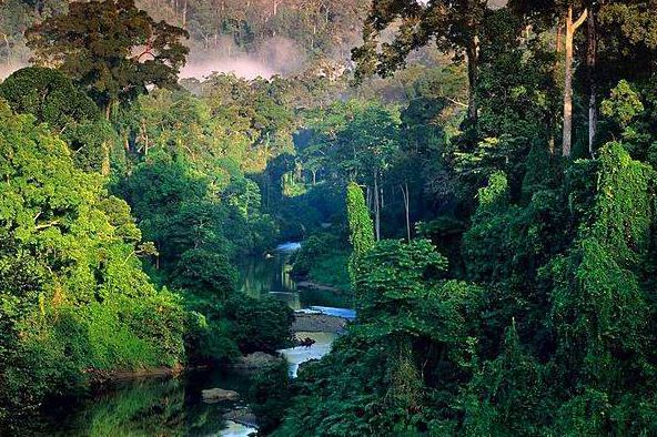 Биологическое разнообразие Амазонии: преимущества экотуризма