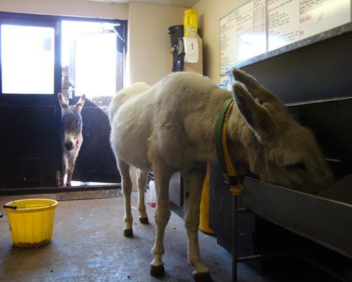 Houdini din lumea animalelor: 6 poveşti uimitoare despre evadări (Foto)