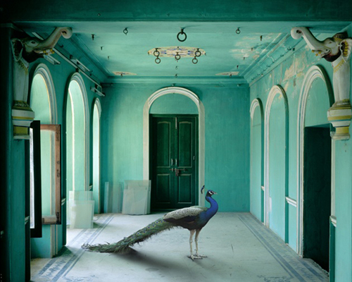India Song: decoraţiuni interioare cu animale (Foto)