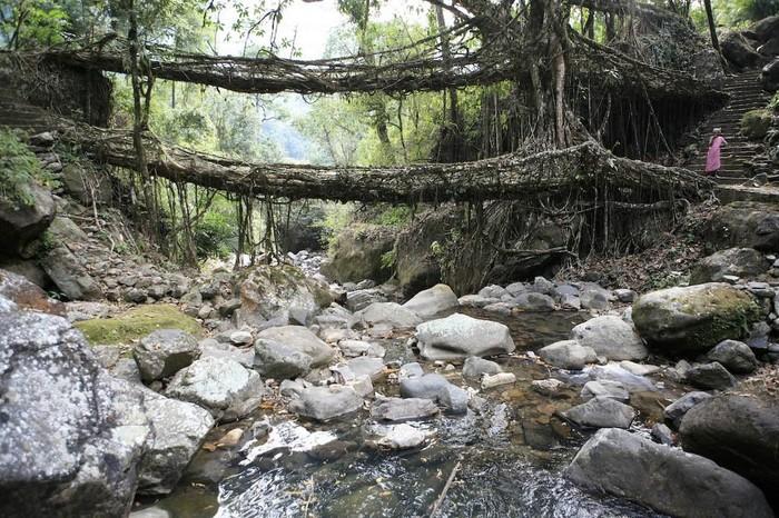 Живые мосты в Индии (Фото)