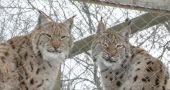 В Кишиневском зоопарке животные стойко переносят морозы (+Видео)