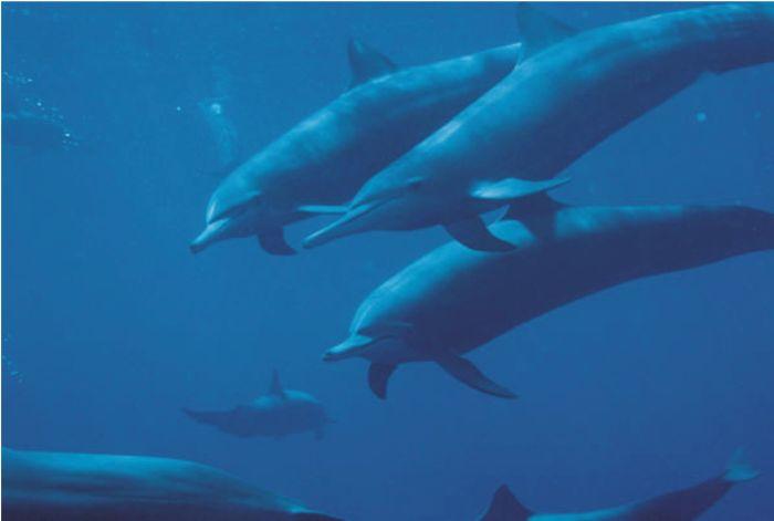 Delfinii merită drepturile omului, susţin oamenii de ştiinţă