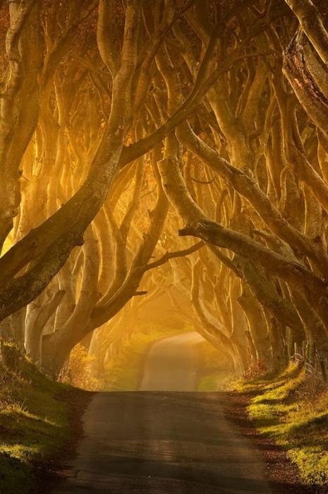 Темная аллея в Ирландии (Фото)