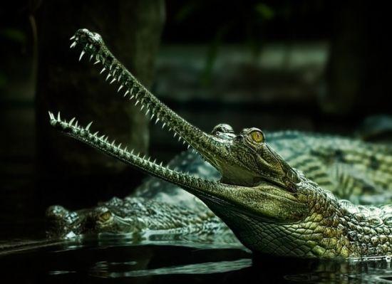 Фотографы-анималисты – за исчезающие виды! (Фото)