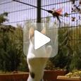 Играющая кошка (Видео)