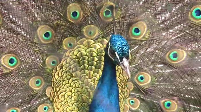 La Chişinău s-a deschis o expoziţie unică de păsări rare (+Video)
