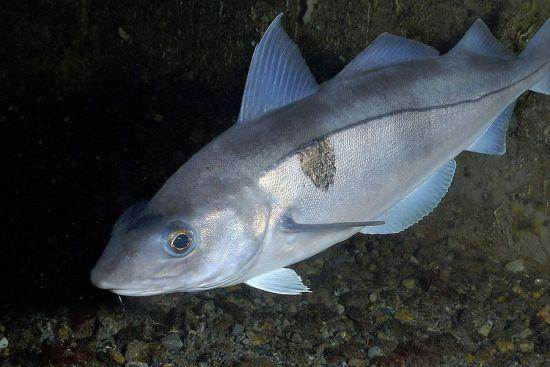 Восстановлены популяции 6 видов рыб и морских животных