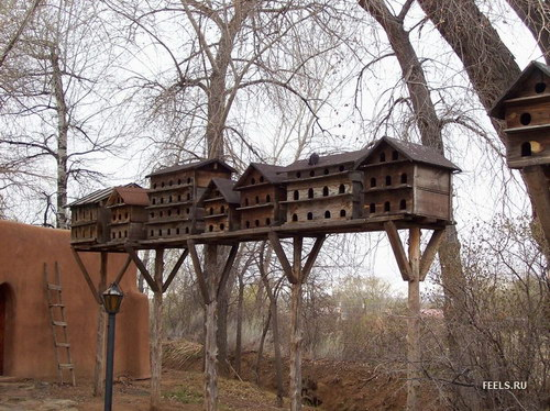 Căsuţe pentru păsări în Rusia