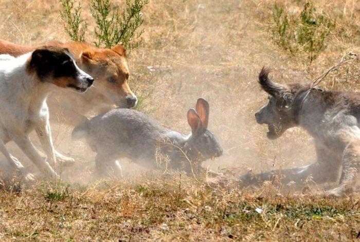 Aceste animale amuzante (Foto)