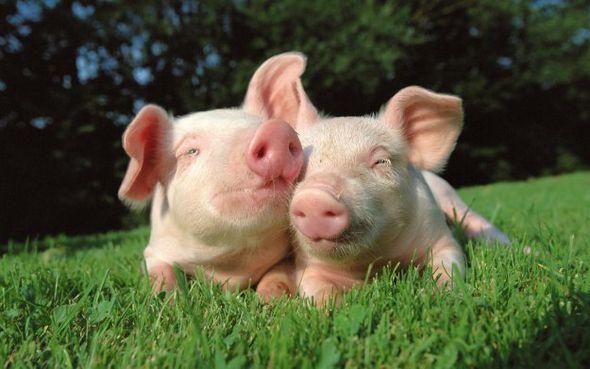 Новая большая подборка интересных фотографий с животными (Фото)