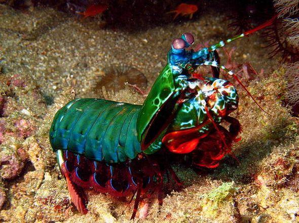 Удивительный подводный мир (Фото)
