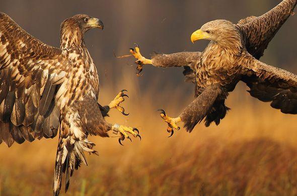 Уникальные кадры живой природы (Фото)