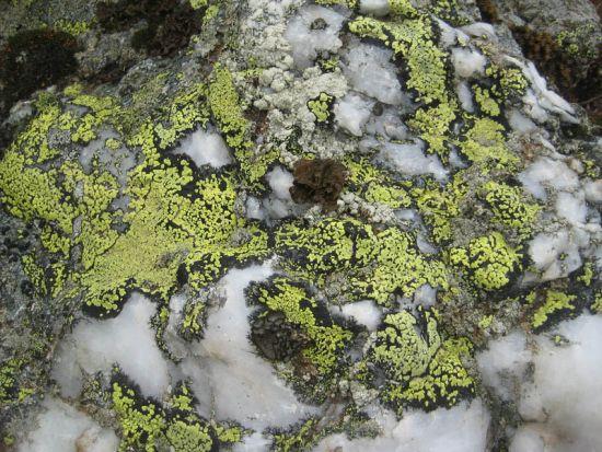 Незаметные союзники – мхи, водоросли и лишайники – очищают воздух и повышают плодородие почв