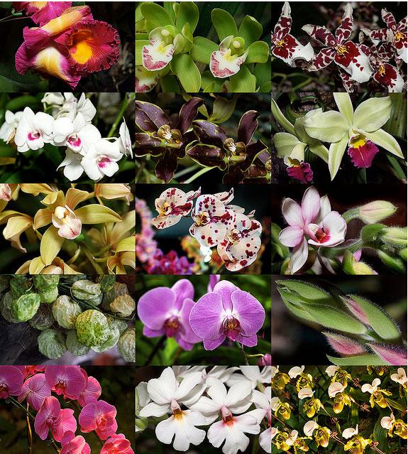 10 самых красивых цветов на свете