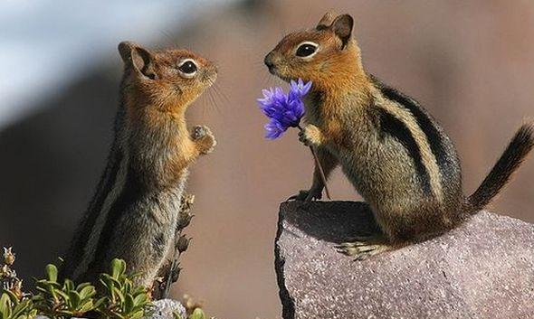 Наверно это любовь? (Фото)