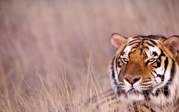 Мгновения мира животных (Фото)
