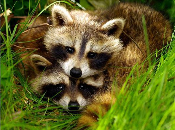 Lumea animalelor: cupluri (Foto)