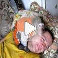Собака - друг человека? (Видео)