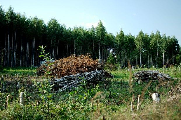 Эко-поселение Градислав. Почему русского тянет к земле