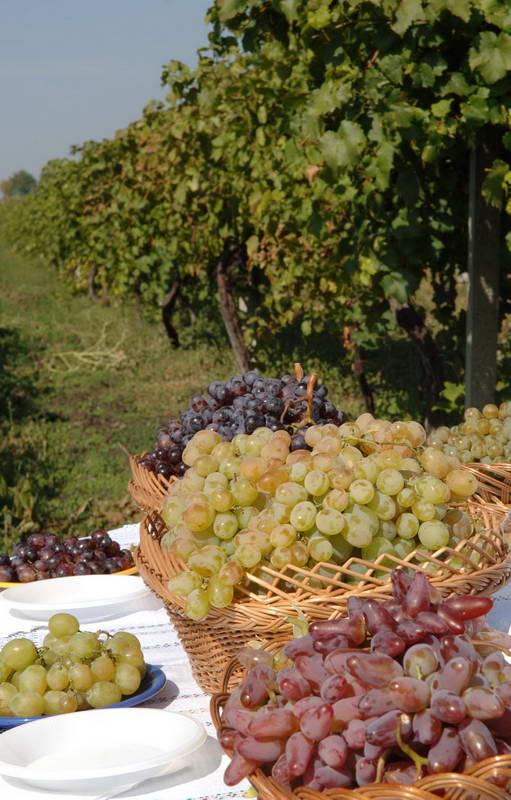 Виноград сохранит здоровое сердце