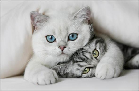 Для тех кому нравятся кошки (Фото)