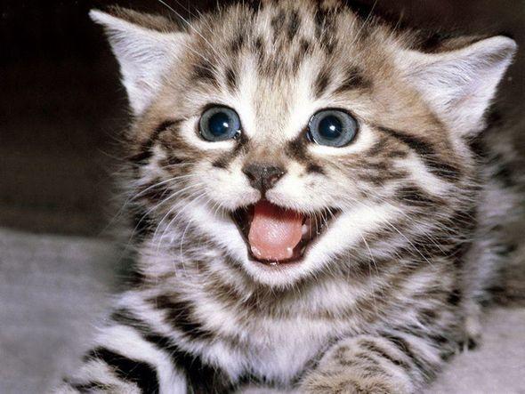 Котята (Фото)