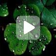 Н.И. Курдюмов - Уроки садоводства. Часть 2 (Видео)