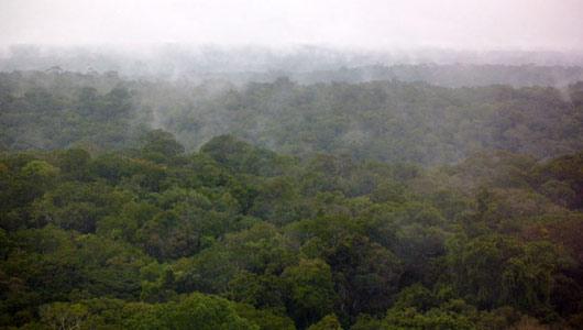 Грибы лесов Амазонки помогают создавать облака и дождь