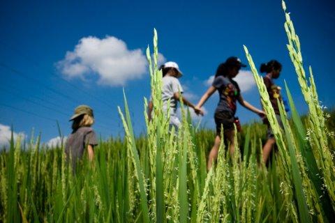 Зеленая школа из бамбука на острове Бали