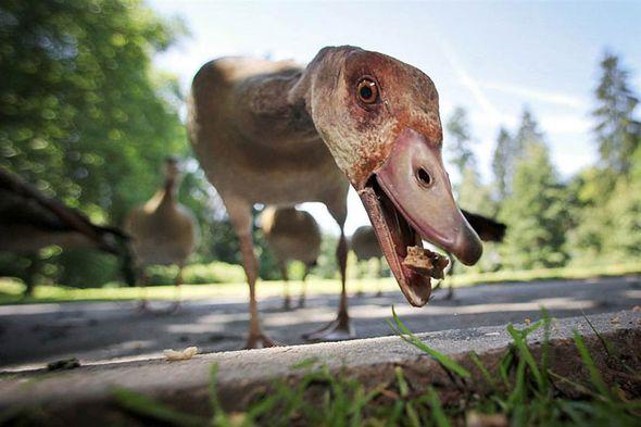 Лучшие фотографии животных за неделю (Фото)