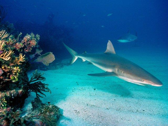 Подводный мир (Фото)