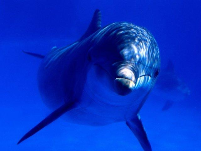 Lumea subacvatică. Partea 3 (28 Foto)