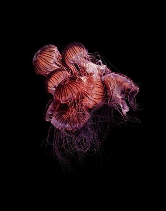 Подводный мир. Часть 1. (20 фото)