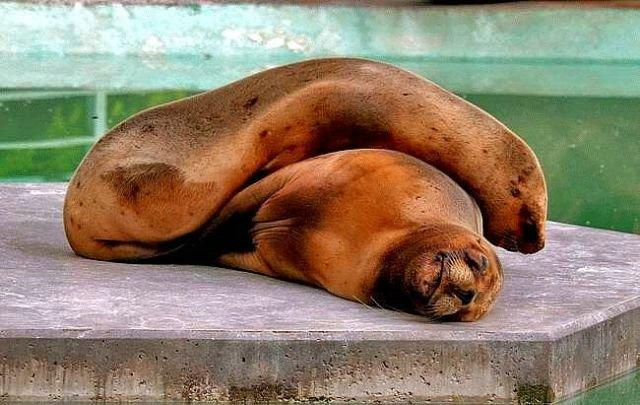 Спящие животные (Фото)